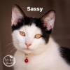 Photo of Sassy