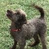 Photo of Curly Stu