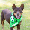 Photo of Vulcan *Foster Or Adopt *