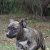 Photo of Bessy