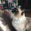 Photo of Mica (Pronounced Mitzah)