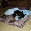 Photo of Roxy