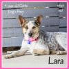 Photo of Lara ~ 4 Year Old Cattle Dog X Foxy