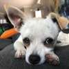 Photo of Russell  **Adoption Pending**