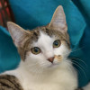Photo of Ellie **2nd Chance Cat Rescue**