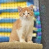 Photo of Beret  ** 2nd Chance Cat Rescue**