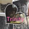Photo of Trinity If002 18