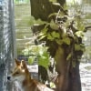 Photo of Mogwai Dingo X