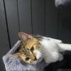 Photo of Diva