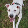 Photo of Echo (Foster Home Needed)