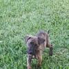 Photo of Tonka