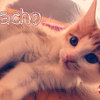 Photo of Nacho