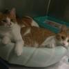 Photo of Hamish & Andy