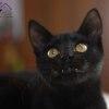 Photo of ***Vera***
