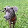 Photo of Binda