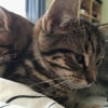 Photo of Codi **2nd Chance Cat Rescue**