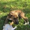 Photo of Kodi