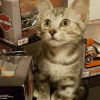 Photo of Jannae **2nd Chance Cat Rescue**