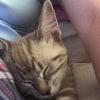 Photo of Beatrix (Hc960)