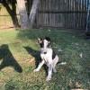 Photo of Marshall ~ Adoption Pending ~