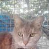 Photo of Tee
