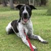 Photo of Skye