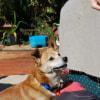 Photo of Rusty