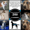 Photo of Zigi