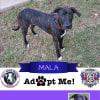 Photo of Mala