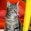 Photo of Ralf