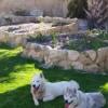 Photo of Mya And Wolf