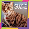 Photo of Suzie