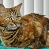 Photo of Munchkin **On Trial With My New Family**