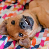 Photo of Lola **No More Enquries Please**