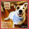 Photo of Gemma ~ 10 Year Old Cattle Dog X