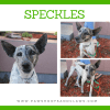 Photo of Speckles