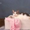 Photo of Gizelle Ec0456