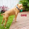 Photo of Opie