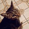 Photo of Tigga