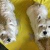 Photo of Duke (& Maggie)