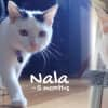 Photo of Nala (Located In Reservoir, Foster Carer Needed)