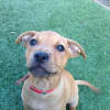 Photo of Thelma   Sweet Gentle Puppy Girl!