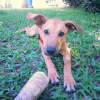 Photo of Ladybugz