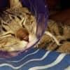 Photo of Jasper (Nc456) Adoptiion Pending