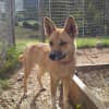 Photo of Beyonce  Dingo