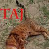 Photo of Taj
