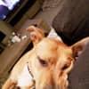 Photo of Sachii