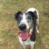 Photo of Kaylee (On Trial 15 Jan)