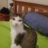 Photo of Kitkat (Nc544)