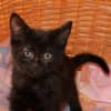 Photo of Doris ** 2nd Chance Cat Rescue**